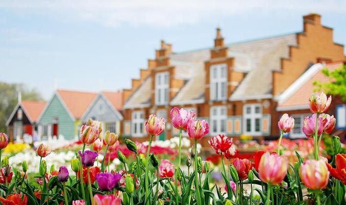 tuliip-time-festival-holland-michigan-tulips-flowers-7