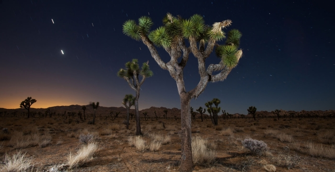 1400-joshua-tree-national-park-california-night-stars.imgcache.revc9454d12f5a77e8c718adf4d9934cf43.web